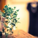 観葉植物 空気清浄効果